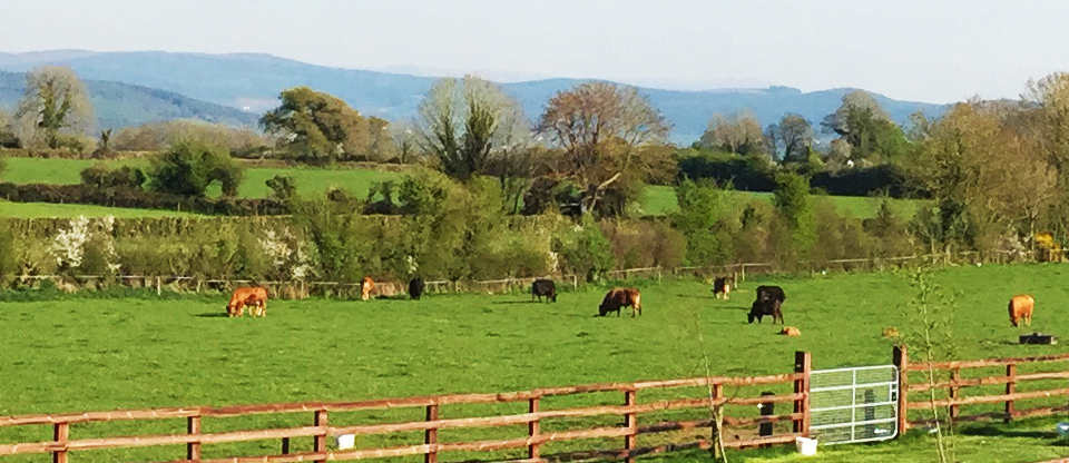 Local Tipperary Food Producers.